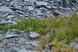 Luontoäidin kukkapenkki Varangerin niemimaalla meren rannalla
